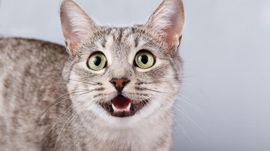ВМоскве кот помог найти труп пожилой хозяйки