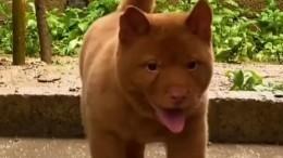 Котопес: похожий накошку щенок стал звездой сети