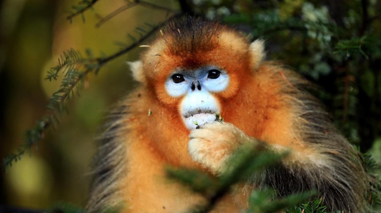 Фото: Какие виды животных открыли вXXI веке?