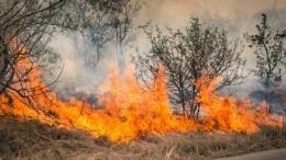 Крупный лесной пожар бушует вЧелябинской области