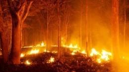 «Уходи, уходи, Леха!»— пожар вЧелябинской области охватил тысячи гектаров