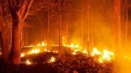 Пожар вчелябинском поселке перекинулся на63 дома, втом числе 40 жилых