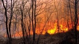 Губернатор подтвердил гибель человека врезультате лесных пожаров под Челябинском