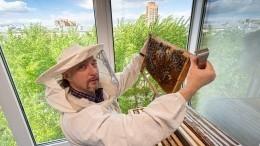 Ученые объяснили, пьянеютли пчелы из-за забродившего отжары нектара