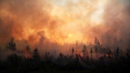 Видео: более 600 тысяч гектаров тайги полыхают вЯкутии