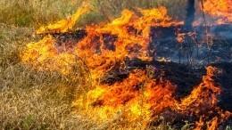 «Приноровились, начали тушить»: как три подростка спасали отпожара село под Тулой?