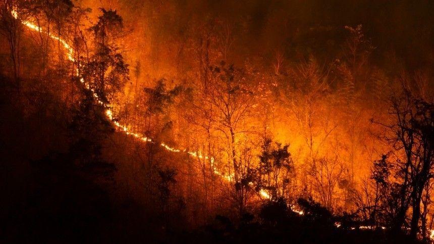 Дымовая завеса: под Петербургом горят торфяники