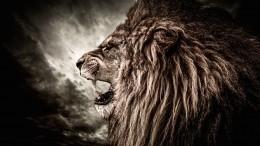 Неудачное селфи: лев едва нерастерзал подростка вКраснодарском крае