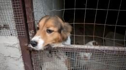 Вответе затех, кого приручили: усилить защиту животных предлагают вГосдуме России