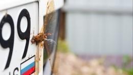 Лайфхак: Как защитить машину отналипших насекомых?