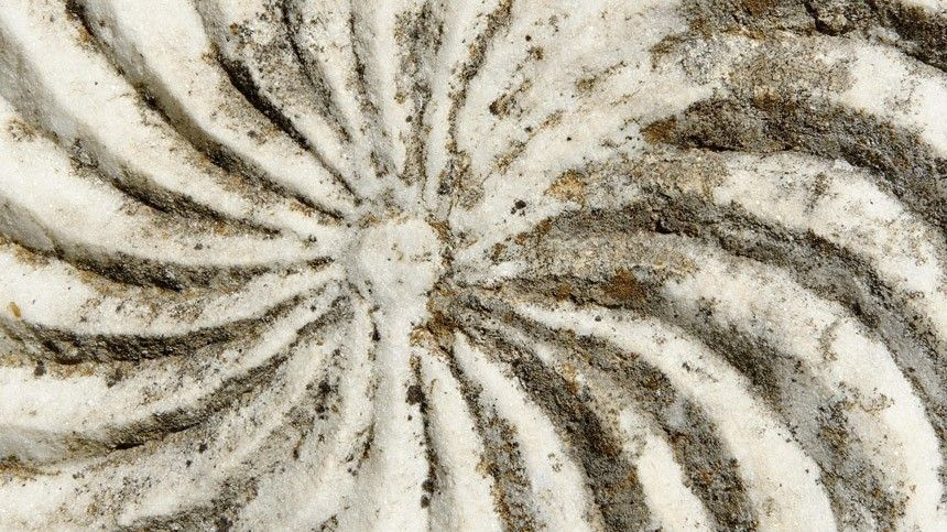 Привет измезозойской эры: яйца возрастом 85 миллионов лет нашли вАргентине