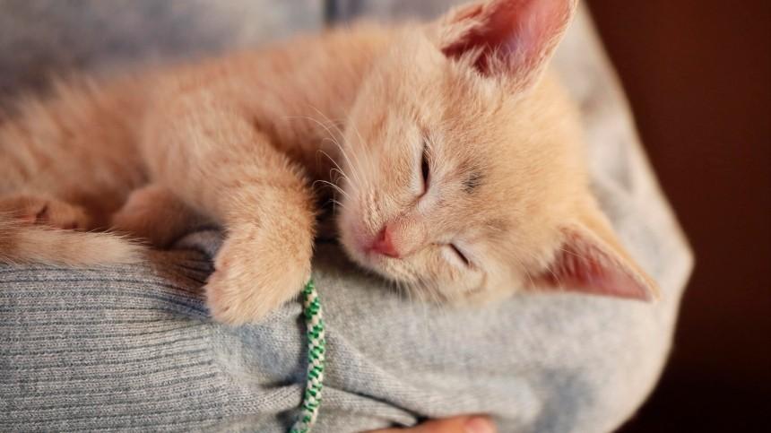 Почему кошки любят спать начеловеке? —отвечают эзотерики