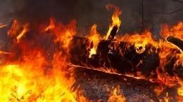 Надежда наавиацию: лесные пожары взяли вогненное кольцо жилые кварталы вЯкутии