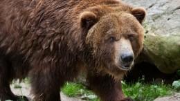Турист изМосквы погиб отлап медведя вприродном парке вКрасноярском крае