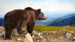 Директор назвал причины появления впарке Красноярского края медведей-людоедов