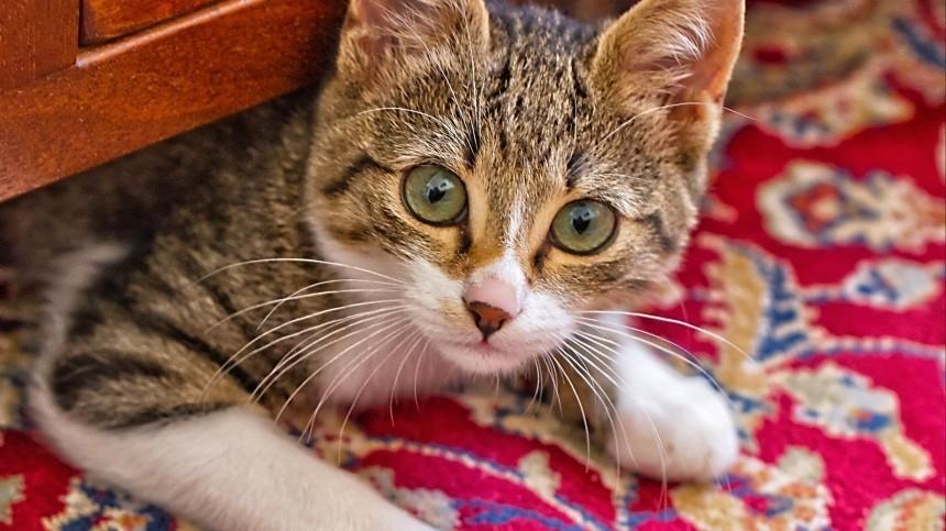 Все из-за кота: вМоскве сын шаманки десять раз ударил сиделку ножом вгрудь