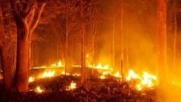 Намеренные поджоги? Почему вспыхнули лесные пожары накурортах вТурции
