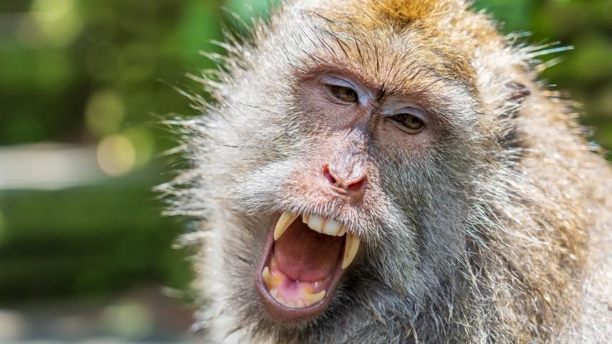 Видео: Массовая драка обезьян парализовала улицы города вТаиланде