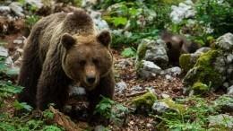 Тело разодранного медведем туриста нашли вприродном парке «Ергаки»— видео