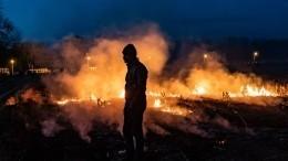 Ответственность заподжоги лесов вТурции взяла террористическая организация
