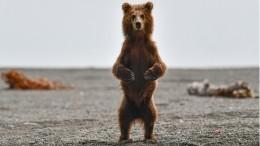 Фото недели: Медведи Камчатки вопасности— как ироссийские туристы вТурции