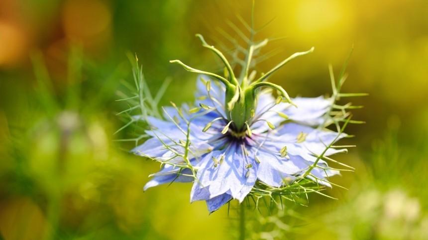 ВАвстралии нашли цветок, который вылечит коронавирус