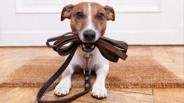 Втесноте, давобиде: вЛенобласти планируют обновить места выгула для собак