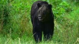 Отважный кот Вася спас хозяев отдикого медведя иобрел популярность всети