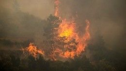 ВГреции началась массовая эвакуация из-за увеличения крупных очагов пожаров