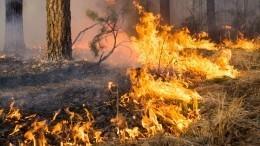 Из-за лесных пожаров эвакуированы жители двух сел вЯкутии