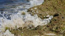 Черное море стало зеленым: пляжи Анапы атаковали гниющие водоросли