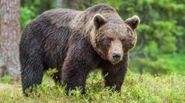 Пилот уговорил медведя ненападать натуристов ипопал навидео