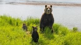 Лавров заявил, что вРоссии даже медведи живут лучше, чем индейцы вСША