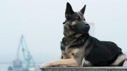 Служебная собака Есения отыскала мать младенца, брошенного впарадной Петербурга