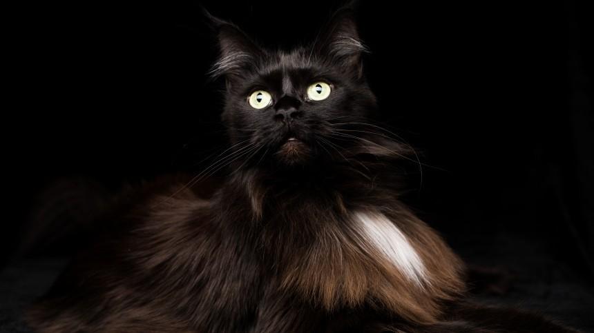 Зеркала ичерные кошки: Какие приметы могут навлечь несчастья впятницу, 13-е