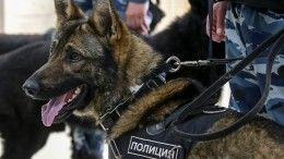 Собачью верность петербургского пса высоко оценили вИталии