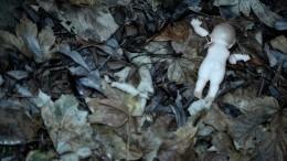 Появились кадры сместа обнаружения расчлененного тела маленькой девочки вТюмени