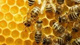 Пользователи сети обсуждают оригинальный способ медитации спчелами
