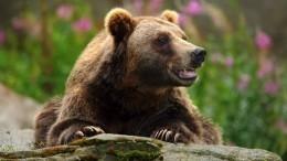 Брошенного из-за пандемии цирком шапито медведя приютила семья изСаратова