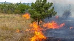 Названы возможные причины природного пожара убаз отдыха вСвердловской области