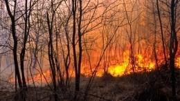 Пламя отрезало путь кспасению туристам вдвух санаториях Свердловской области