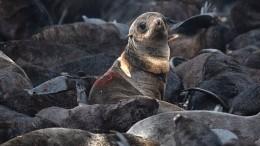 Фото недели: апокалипсис вМарий Эл, спасение тюленей ипрощание сМеркель
