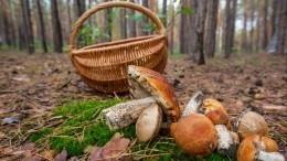 Пора тихой охоты: Лучшие лайфхаки, как найти много грибов
