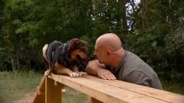 Человек собаке друг: Тимофей Баженов сосвоими волонтерами взял шефство над приютом