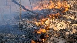 Вырубка деревьев помогла вырваться огнеборцам изсмертельной ловушки