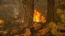 Всети появилось видео спотерявшимися влесном пожаре вБашкирии добровольцами