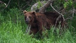 Красноярский полицейский застрелил медведя натерритории сельской школы