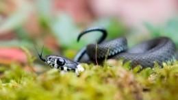 Мама пострадавшей малышки оценила последствия укуса змеи для еедочери