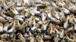 Гигантский рой пчел парализовал центр Нью-Йорка