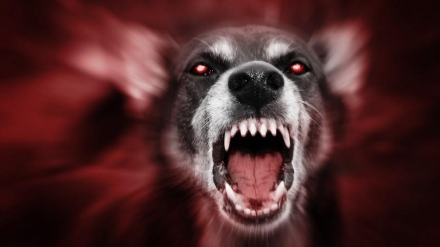ВПерми собака напала наребенка иоткусила ухо